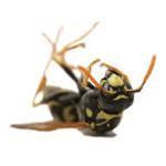 ABATE Pest Management